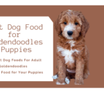 Best Dog Food for Goldendoodles Puppies